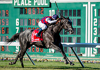 OCEANPORT, NJ - JUNE 30: Funtastic #1, ridden by Antonio Gallardo, wins the United Nations Stakes on United Nations Stakes Day at Monmouth Park Race Track on June 30, 2018 in Oceanport, New Jersey. (Photo by Scott Serio/Eclipse Sportswire/Getty Images)