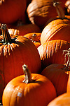 Pumkins in the fall foliage.