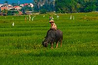 A farmer with his water buffalo, near Hoi An, Vietnam.