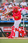 24 February 2019: St. Louis Cardinals catcher Francisco Pena in action during a Spring Training game against the Washington Nationals at Roger Dean Stadium in Jupiter, Florida. The Cardinals fell to the Nationals 12-2 in Grapefruit League play. Mandatory Credit: Ed Wolfstein Photo *** RAW (NEF) Image File Available ***