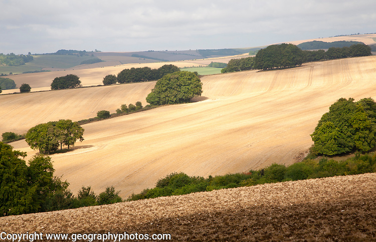 Rolling countryside arable fields in summer on chalk downland near Aldbourne, Wilsthire, England, UK