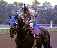 Play Fellow (On the Sly), 1983 Travers winner, with a young Jerry Bailey up.