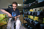 Palestinian worker gives the final touch to a new sandal in a shoe factory in the West Bank City of Hebron, on Aug. 31, 2010. Hebron, which is known for its leather industries for more than 80 years, exports more than 100,000 pairs of shoes every year, according to statistics from the Palestinian Trade and Commerce Chamber. Photo by Eyad Jadallah