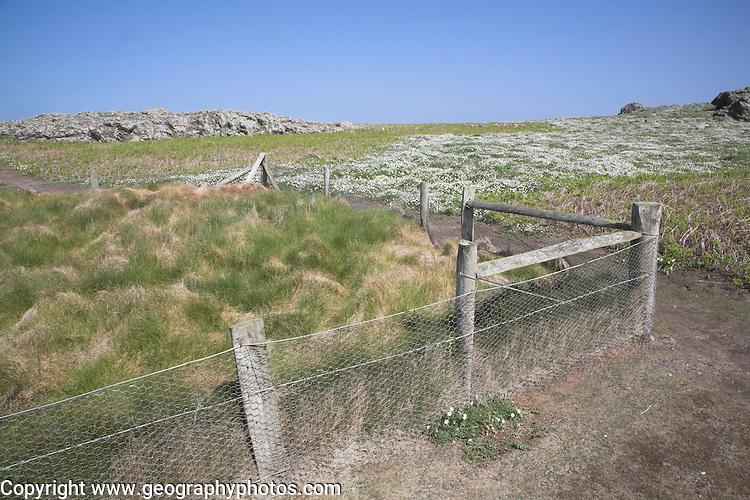 Rabbit fenced enclosure Skomer Island, Pembrokeshire, Wales