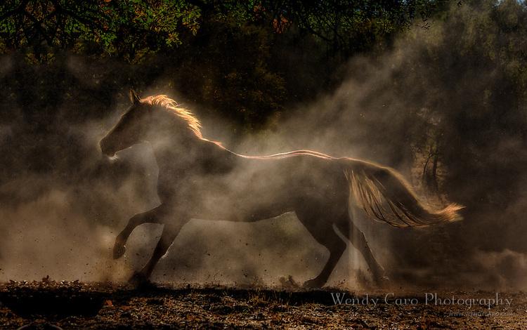 Back lit stallion galloping through dust, slight silhouette