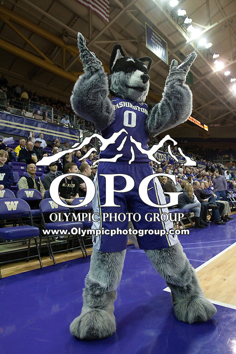 Mar 13, 2012:  Washington Huskies mascot Harry pumped up the crowed during the game against UT Arlington.  Washington defeated UT Arlington 82-72 in the first round of the NIT basketball tournament at Alaska Airlines Arena Seattle, Washington...