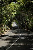 Arch of trees in the Parque nacional de Garajonay forests, La Gomera, Canary Islands,Spain
