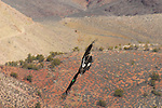 Condor in flight on South Kaibab Trail