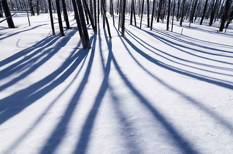 Tree trunks and their shadows at Tangled Creek, Yellowstone NP
