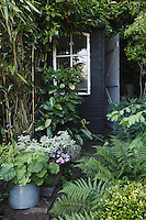 The black-painted garden shed is half-hidden behind bamboo, laurel and fern