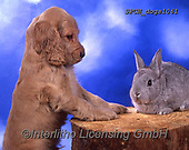 Xavier, ANIMALS, REALISTISCHE TIERE, ANIMALES REALISTICOS, dogs, photos+++++,SPCHDOGS1061,#a#, EVERYDAY