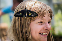 Like a natural hair barrette, a butterfly lands on side of the head of a young visitor to the Butterfly Pavilion prompting a delighted smile.