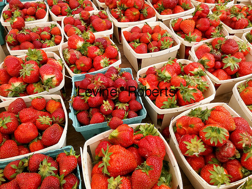 Local strawberries on sale at a farmers stand in the Union Square Greenmarket in New York on Wednesday, June 14, 2017. Because of damp weather followed by sun the sweetness of the local crop is reported to be exceptionally tasty. The crop is short-lived usually over by July. (© Richard B. Levine)