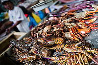 Fresh lobsters and crabs for sale are seen at Mercado de Mariscos seafood and fish market in Panama City, Panama, 1 February 2015.