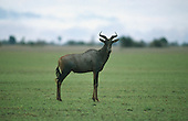 Luangwa National Park, Zambia. Tsebe.