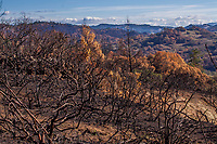 Pepperwood, After the Fire