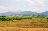 A vineyard with high trained vines protected by barbed wire fence and mountains in the background. Near Podgorica. Vineyard watered with artificial irrigation. Montenegro, Balkan, Europe.