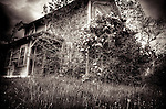 A derelict timber house in USA with roses bushes