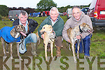 RUBDOWN: Bill Keane (Listowel), Joe Wallace (Glin) and John Flynn (Tarbert) given their dogss the final rub down before their compete inthe Kilflynn Coursing in Kilflynn on Friday.