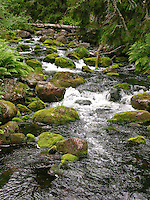 Naturnaher Bach, schnell fließend