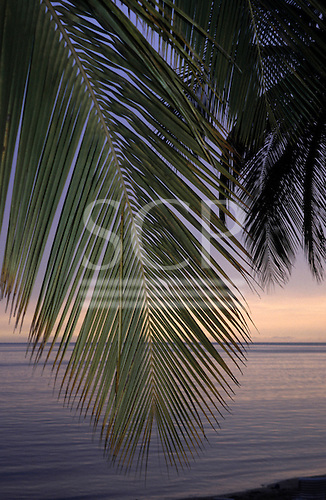 Windjammer Landing Resort, St. Lucia. View out to sea past green palm leaves from hotel in Castries Bay at sunset.