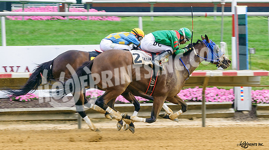 Sweet on Smokey winning The Dashing Beauty Stakes at Delaware Park on 7/9/16