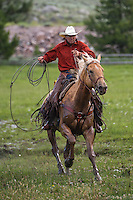 A photo of a cowboy galloping his horse holding a rope. Western Cowboy and Cowgirl photos,