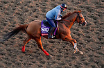 October 31, 2019: Breeders' Cup Sprint entrant Whitmore, trained by Ron Moquett, exercises in preparation for the Breeders' Cup World Championships at Santa Anita Park in Arcadia, California on October 31, 2019. John Voorhees/Eclipse Sportswire/Breeders' Cup/CSM