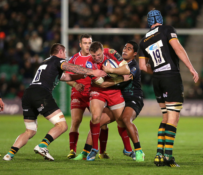 Scarlets' Hadleigh Parkes is tackled by  Northampton Saints' Teimana Harrison and Ahsee Tuala (right)<br /> <br /> Photographer Stephen White/CameraSport<br /> <br /> Rugby Union - European Rugby Champions Cup Pool 3 - Northampton Saints v Scarlets - Saturday 14th November 2015 - Franklin's Gardens, Northampton<br /> <br /> &copy; CameraSport - 43 Linden Ave. Countesthorpe. Leicester. England. LE8 5PG - Tel: +44 (0) 116 277 4147 - admin@camerasport.com - www.camerasport.com