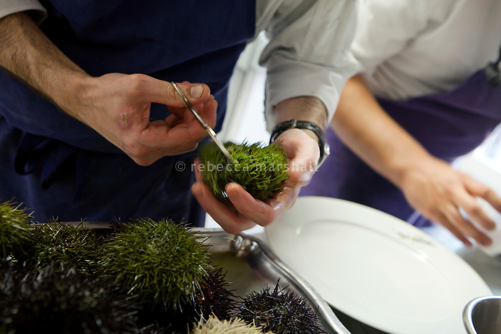 A chef prepares sea urchins in the kitchen of Le Bistro de la Marine, Cagnes sur Mer, France, 07 April 2012