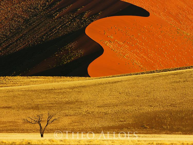 Namibia;  Namib Desert, Namib-Naukluft National Park, acacia tree in front of red sand dune near Sossusvlei