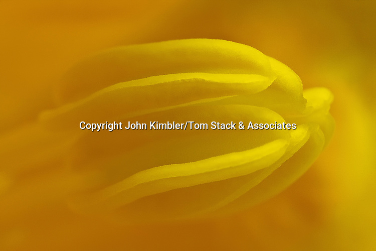 Yellow flower stamen