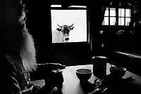 Switzerland. Canton Nidwald. Engelberg valley. Swiss alpine farmers. Kernalp. 1800 meters high. A farmer drinks a coffee while a cow looks at him through the open door's window. Season spent by animals in mountain pastures. Swiss alpine farmers. Alps mountains peasants. © 1996 Didier Ruef