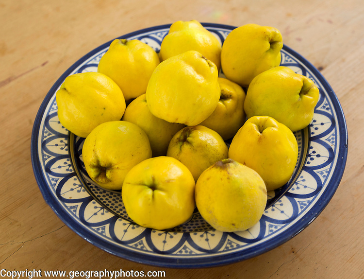 Close up bowl dish of fresh quince fruit on kitchen table, UK