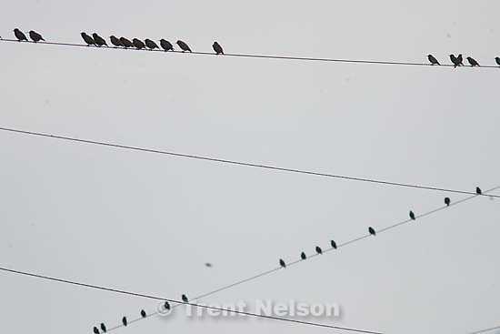 birds on power lines<br />