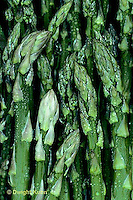 HS20-011a  Asparagus - harvested, perennial - Jersey Centennial variety