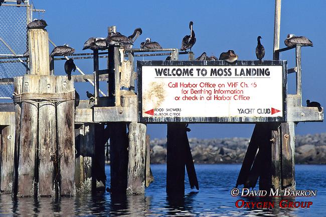 Moss Landing Sign