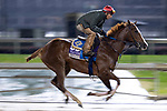November 1, 2018: Selcourt, trained by John W. Sadler, exercises in preparation for the Breeders' Cup Filly & Mare Sprint at Churchill Downs on November 1, 2018 in Louisville, Kentucky. Alex Evers/Eclipse Sportswire/CSM