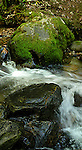Flowing water in trout stream, British Columbia, Canada