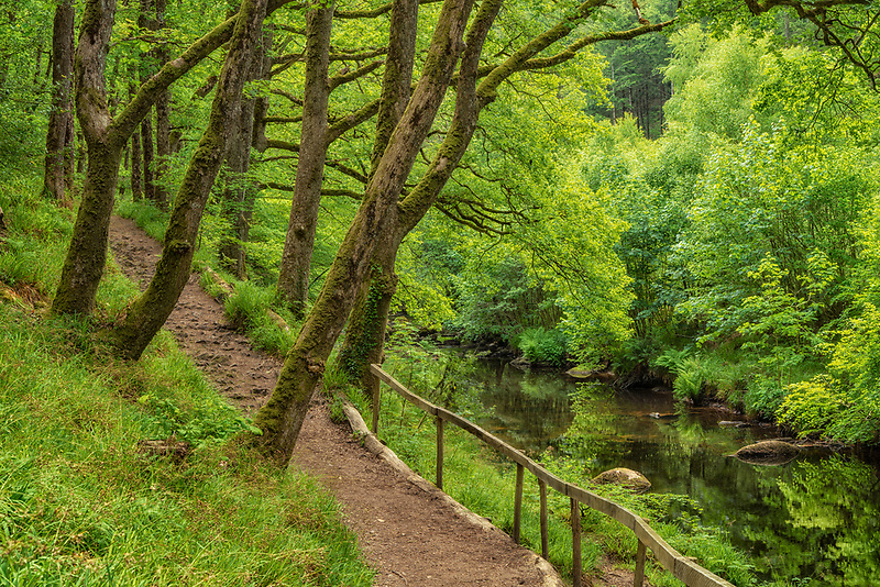 Path along Teign river. Devon County, England
