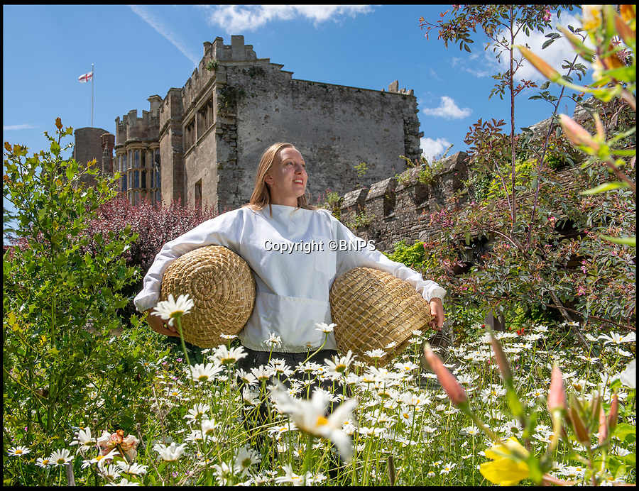 BNPS.co.uk (01202 558833)<br /> Pic: PhilYeomans/BNPS<br /> <br /> Tudor style beekeeping returns to a West Country castle with a rich Royal heritage.<br /> <br /> Honey is being produced for the first time in nearly 500 years at Thornbury Castle near Bristol where Henry VIII honeymooned with Anne Boleyn in 1535.<br /> <br /> Head Gardener Katie Engler is installing 8 handmade beeskeps in the original niches built into the walled garden by the Tudor masons, as part of a plan to restore it back to its full  medieval glory, during Henry's reign collecting honey and keeping bees would have been done in a similar fashion. <br /> <br /> As with lots of the produce grown on site, which is now an luxury hotel, the honey will be used in the kitchen and sold in the garden 'shop'.<br /> <br /> The traditional Beeskeps are hand woven with long straw and wrapped in rattan taking 7 hours each to make.<br /> <br /> The castle near Bristol was built by the third Duke of Buckingham early in Henry's reign, but unfortunately for the Duke, he launched an ill-advised claim to the throne and was beheaded.<br /> <br /> Henry took over his estates and his Catholic daughter Mary (Bloody Mary) spent much of her teenage years in the castle.