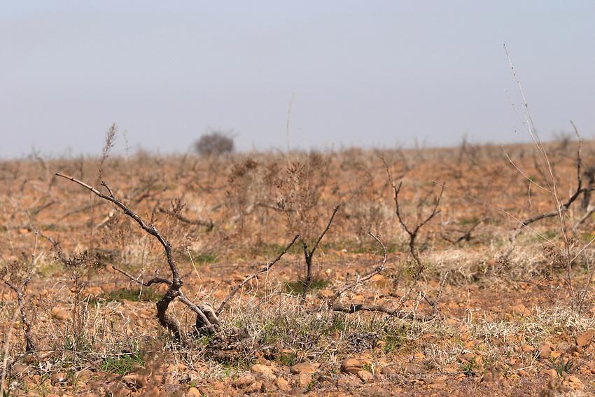 prieto picudo planted ca 1920 Bodegas Margon , DO Tierra de Leon , Pajares de los Oteros spain castile and leon