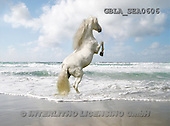 Bob, ANIMALS, collage, horses, photos(GBLASEA0606,#A#) Pferde, caballos