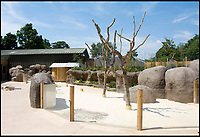 BNPS.co.uk (01202 558833)<br /> Pic: Longleat/BNPS<br /> <br /> The new purpose built enclosure at Longleat.<br /> <br /> One of Australia's most iconic but increasingly threatened species has received a boost as a group of koalas have arrived in Britain to start a new European breeding group.<br /> <br /> The five southern koalas, four females and one male, are part of a ground-breaking initiative to start a new breeding programme for Europe, a sort of back-up population away from the threats the species face in their home country, such as bushfires and disease.<br /> <br /> The cuddly marsupials made the epic journey from Adelaide in Australia to Longleat in Wiltshire, which will be the only place in Europe visitors can see the bigger of the country's two subspecies.<br /> <br /> Longleat has created a special new enclosure for them, including developing a 4,000-tree eucalyptus plantation to keep the koalas well-fed.<br /> <br /> Both the South Australian Government and Cleland Wildlife Park have very strict rules on allowing the animals out of the country.