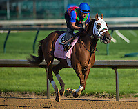 Broken Spell during morning workouts for the Kentucky Oaks at Churchill Downs in Louisville, Kentucky on April 30, 2013.