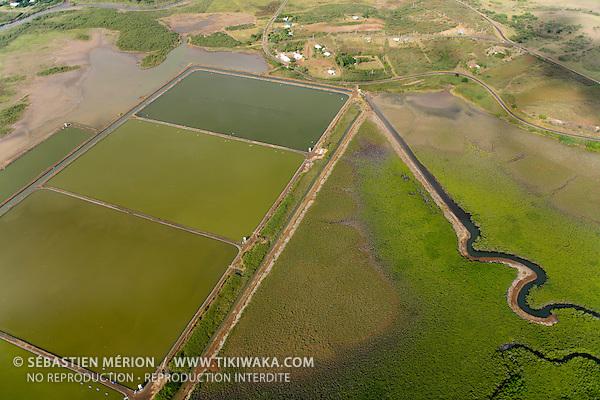 Bassins d'élevage de crevettes, à Voh, Nouvelle-Calédonie