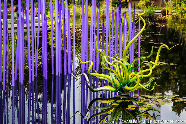 In 2014 the Denver Botanic Gardens featured a show of the renowned glass art of Dale Chihuly.