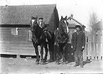 TWO TALL PERCHERONS. In a dirt alley behind a small frame house, a man proudly displays a pair of gleaming Percheron draft horses. The boy comfortably seated bareback atop one of them is probably his son. It looks like these big horses could barely fit into the tiny barn behind them. Many Lincoln houses retained carriage houses well into the 20th century, and backyards in the German-Russian North and South Bottoms neighborhoods often included tiny barns, chicken coops, and summer kitchens. Importing draft stallions from Europe was a major business in Lincoln in this era, before trucks and tractors became the major source of horsepower on farms.<br />
