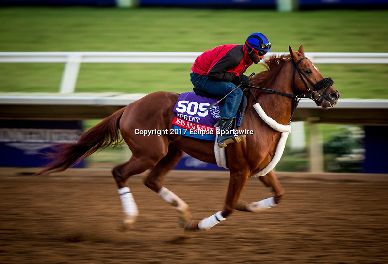 DEL MAR, CA - OCTOBER 27:   Mind Your Biscuits, owned by J Stables, Head of Plains Partners LLC, All American Horses LLC, Daniel Summers & Michael E. Kisper and trained by Chad Summers, exercises in preparation for the Breeders' Cup Las Vegas Dirt Mile at Del Mar Thoroughbred Club on {mothname} 27, 2017 in Del Mar, California. (Photo by Alex Evers/Eclipse Sportswire/Breeders Cup)
