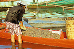 Woman loading fresh shrimps into a brightly painted red orange rowing boat, Sanke river foreshore at dawn, Kampot, Cambodia.